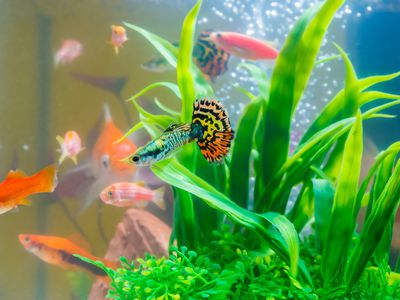 Aquariums & Tanks Fish Tank And Stand Cool In Summer And Warm In Winter