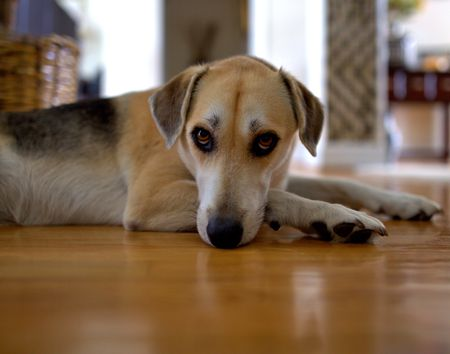 Reasons Why Your Dog Whines And How To Stop It