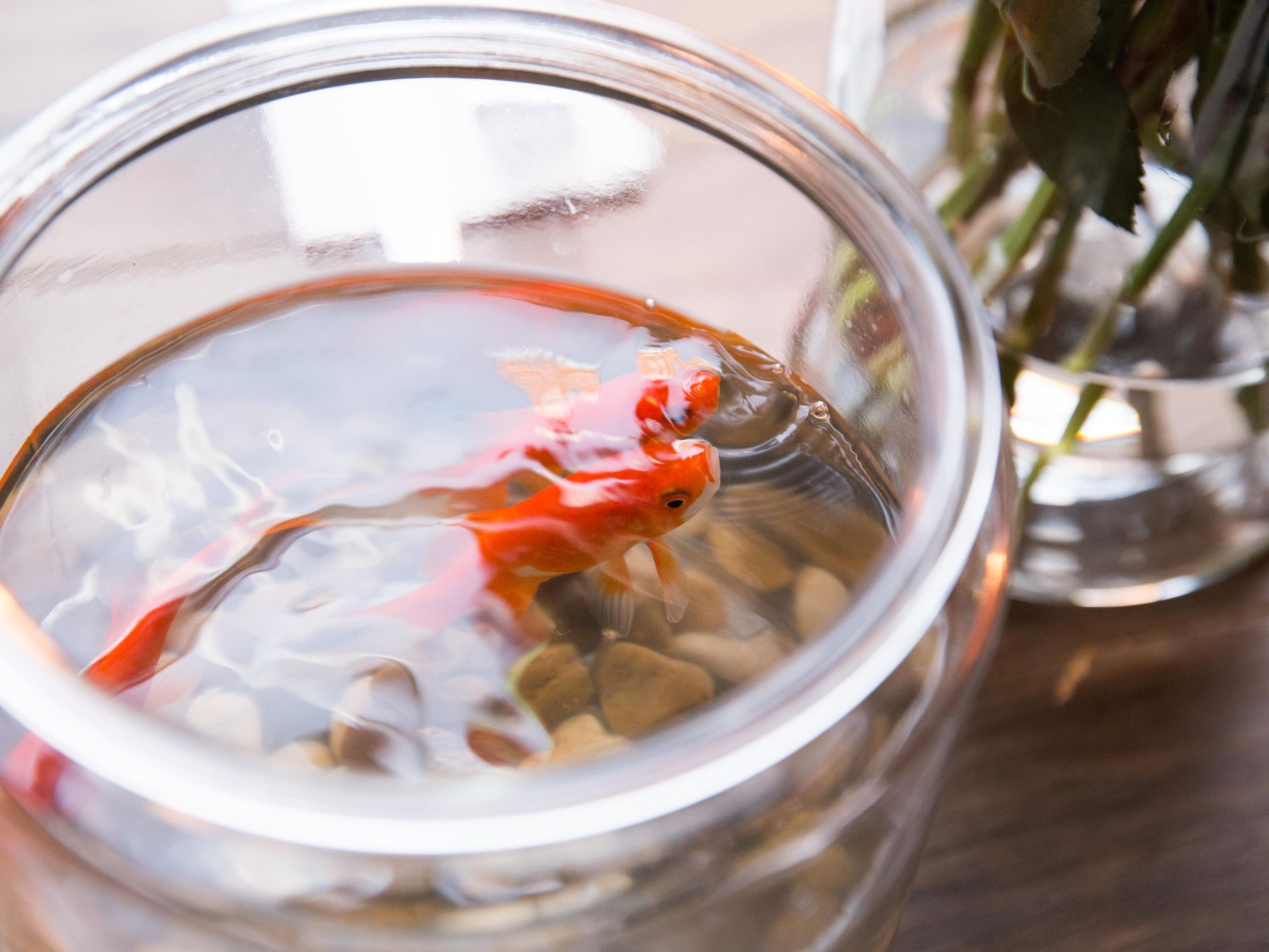 How To Remove White Residue From Aquarium Glass