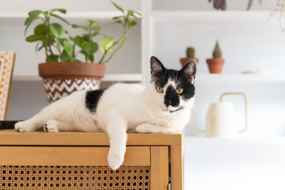 A cat lounging on top of a high dresser