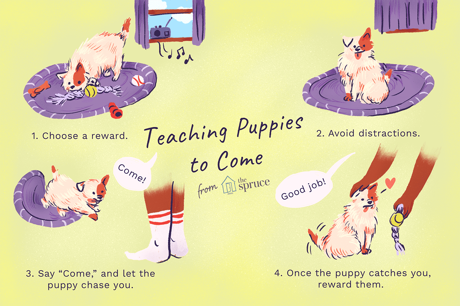 An illustration showing how to teach a puppy to come