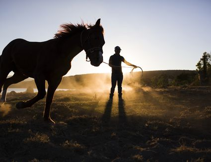 Man training a horse on reins