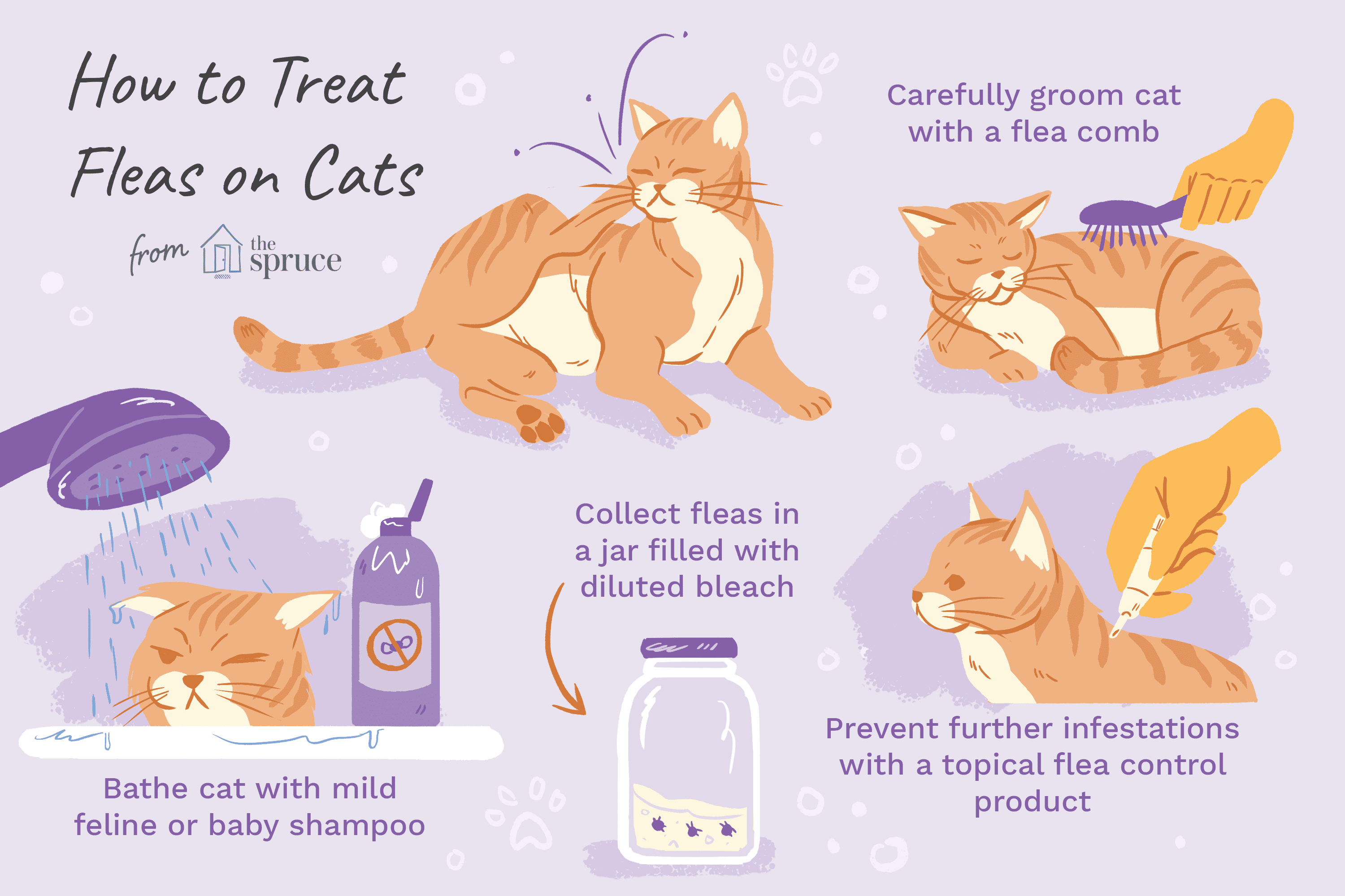 illustration of how to treat fleas on cats