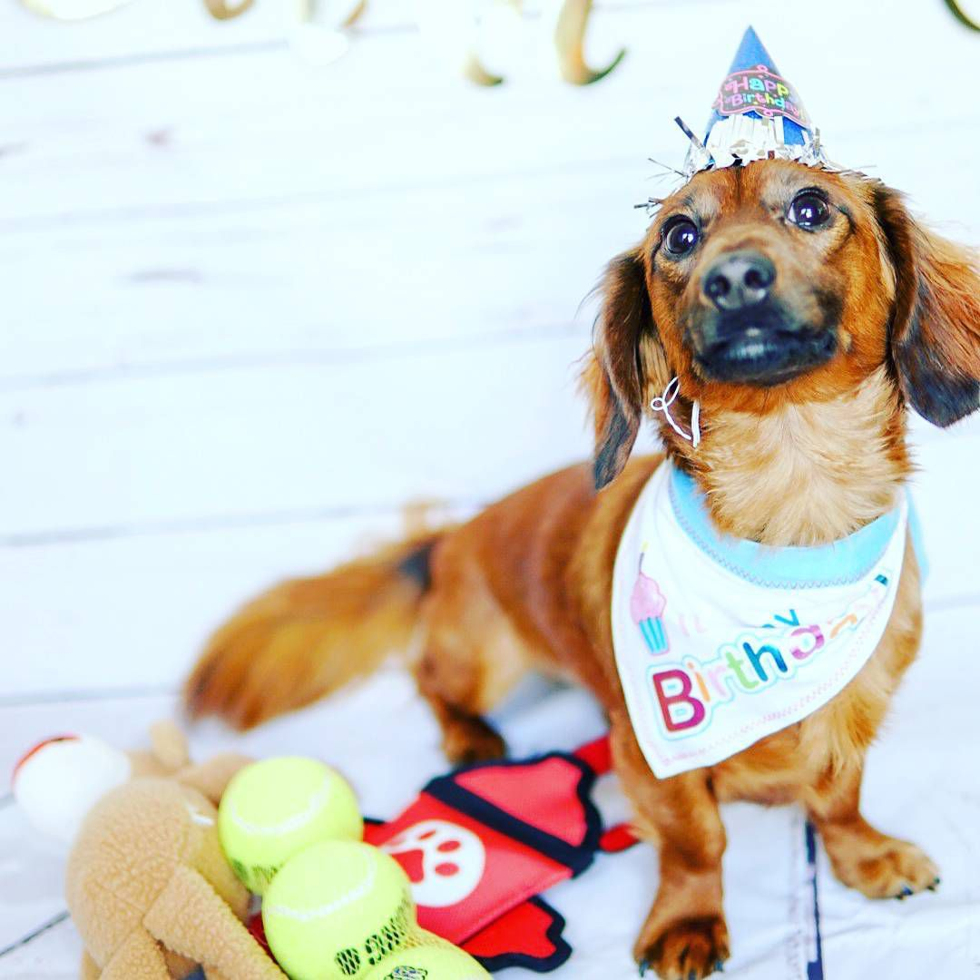 Perro en un lindo traje de cumpleaños