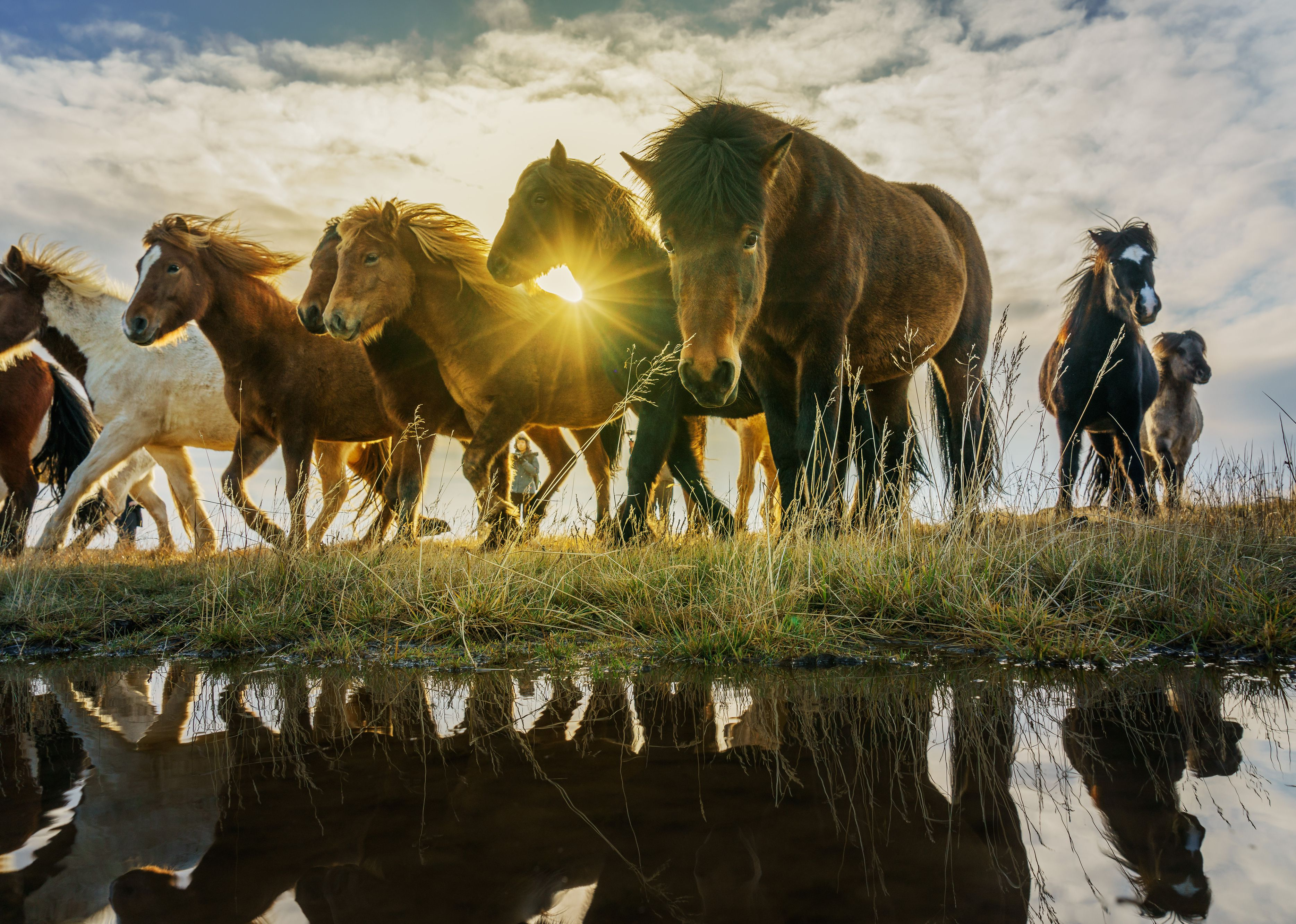 Group of Horses.
