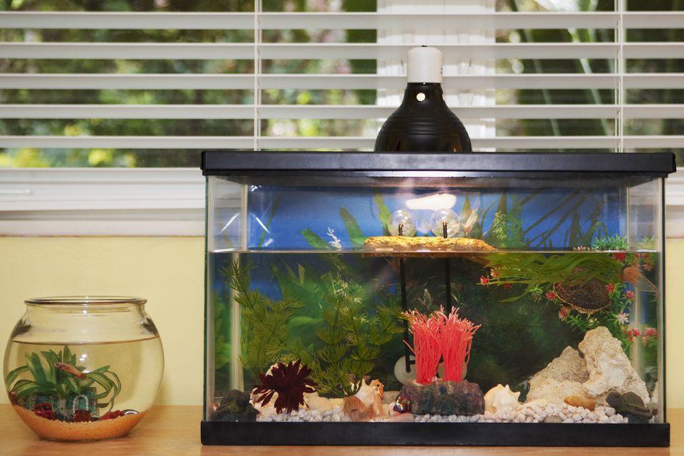 Household Aquariums