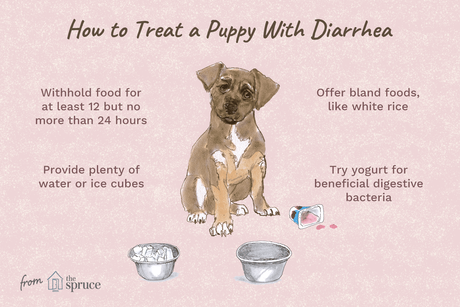 What to Do if Your Puppy Has Diarrhea