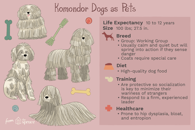 komondor dogs as pets illustration