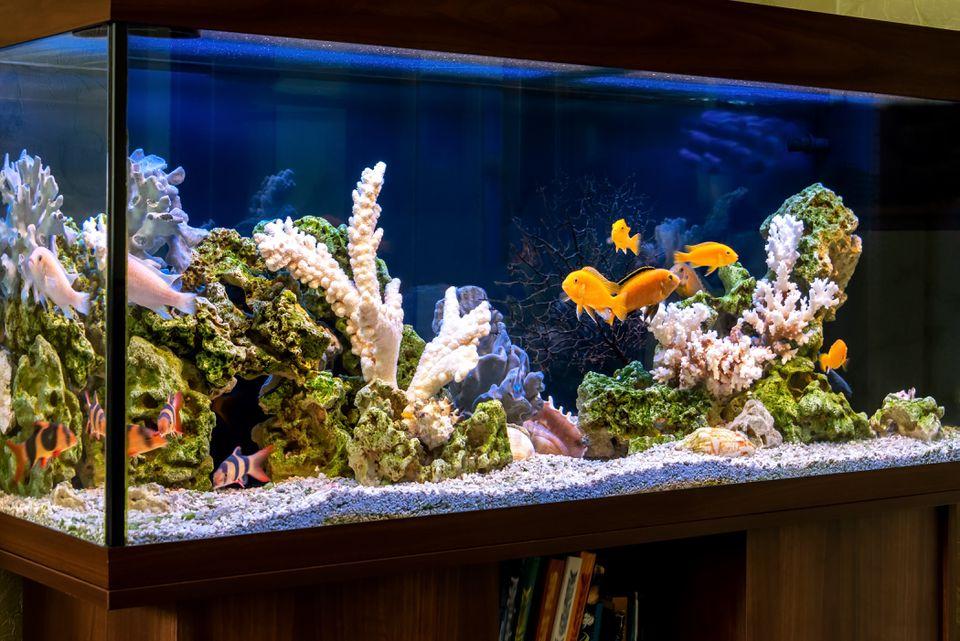 Freshwater aquarium in pseudo-sea style. Aquascape and aquadesign of aquarium