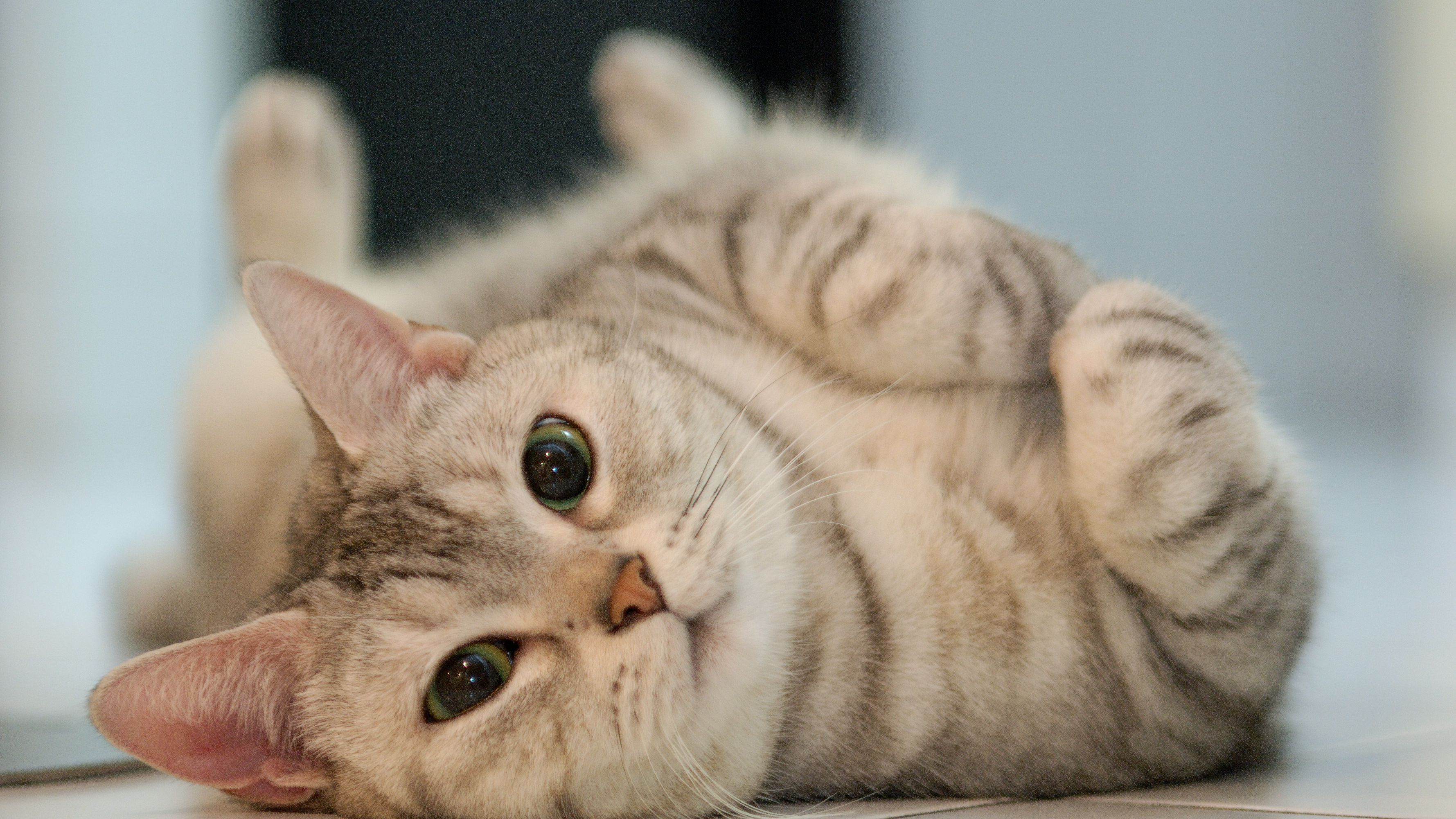 10 Weird Cat Behaviors and Quirks Explained