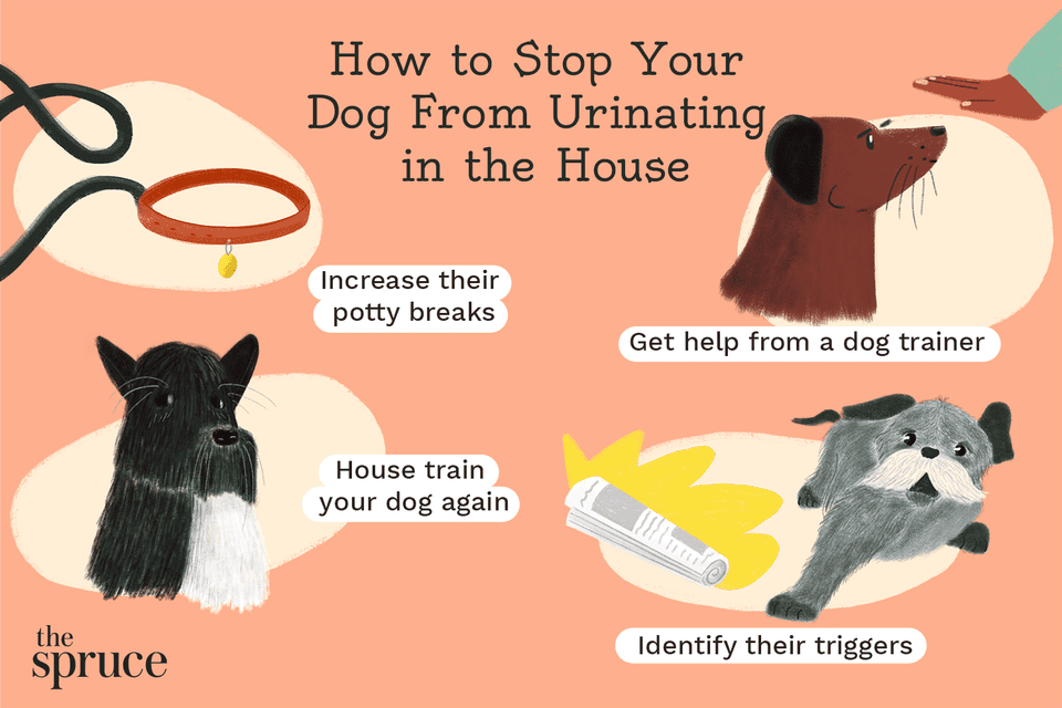 Stopping dogs from urinating in the house
