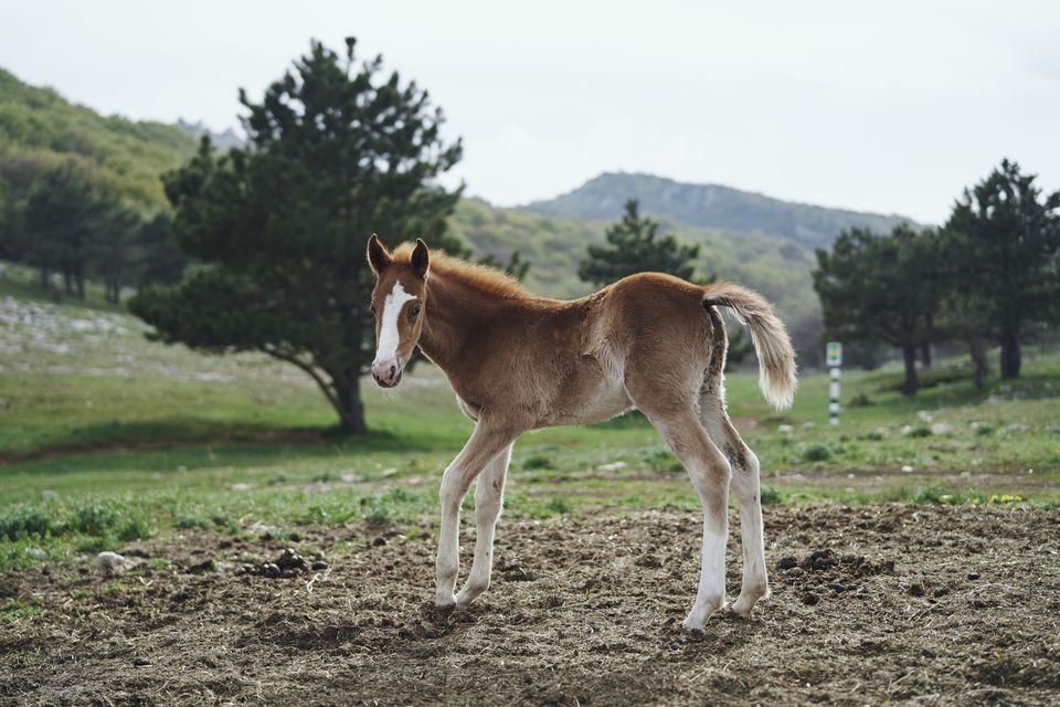 Potro caballo parado en el campo