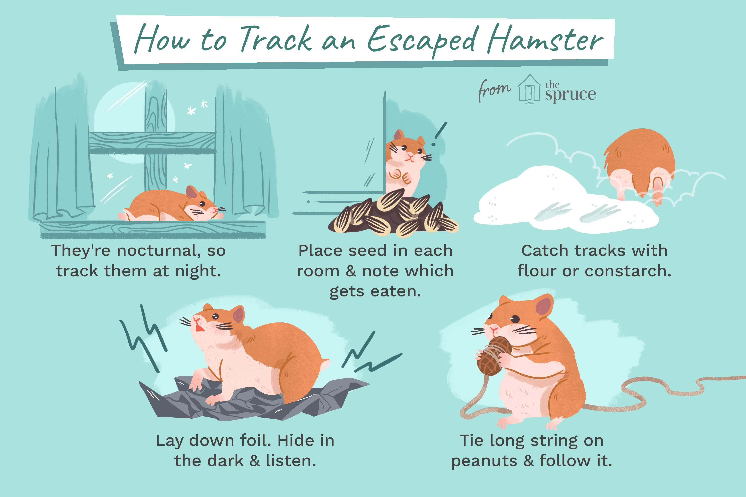 Tips and Tricks to Find a Lost Hamster