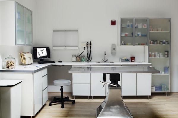 Veterinarian examination room, digital xray on monitor screen