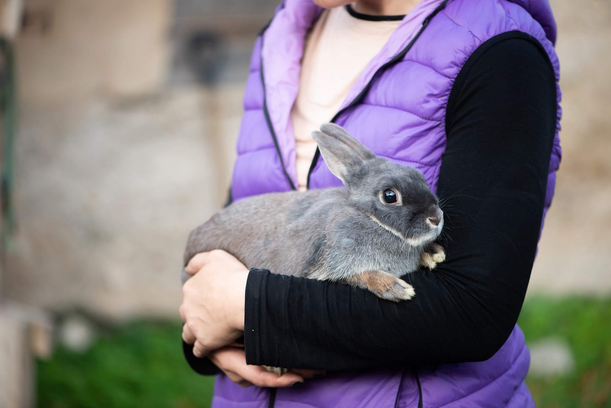 Conejo color lila