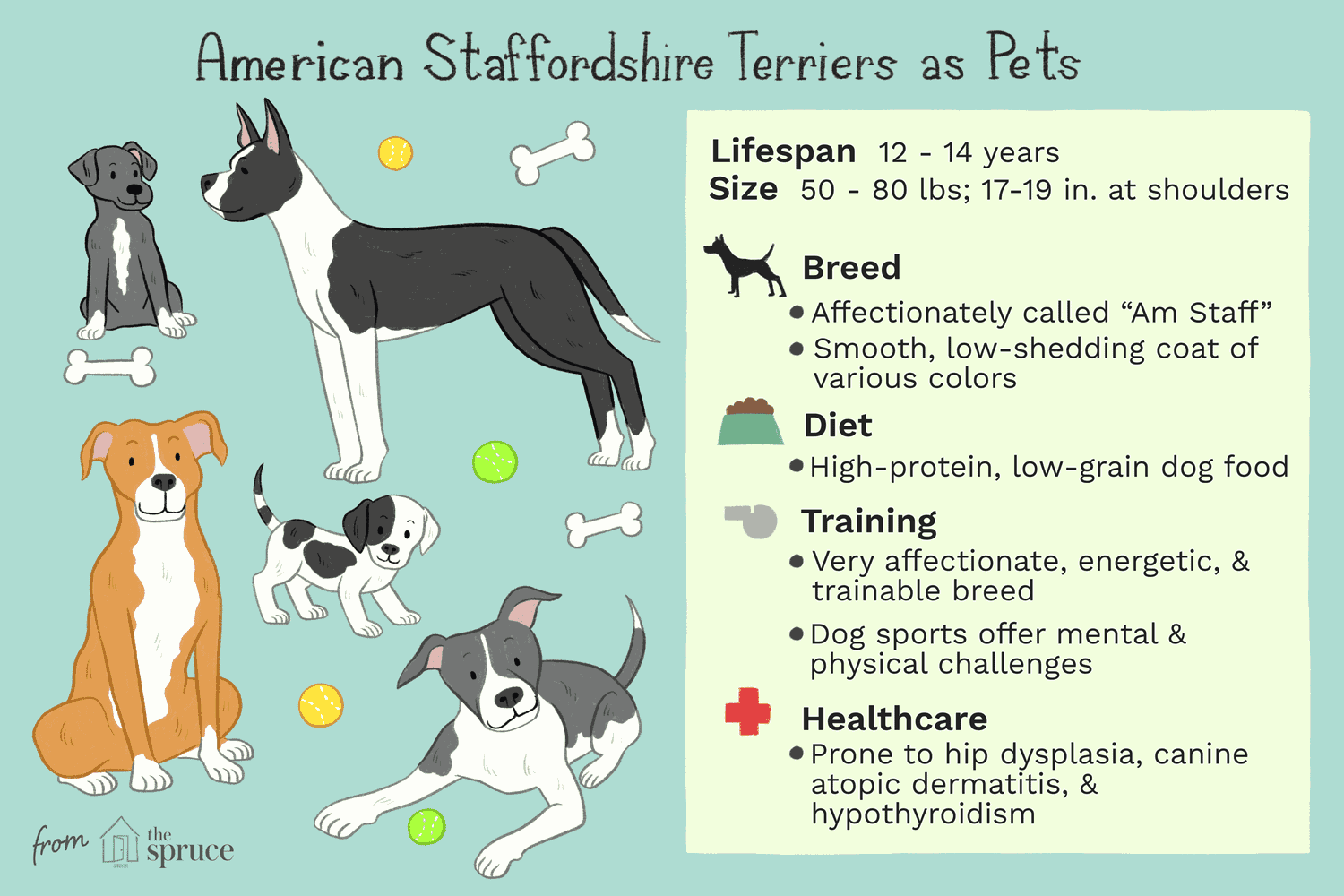 American Staffordshire Terrier Dog Breed Profile