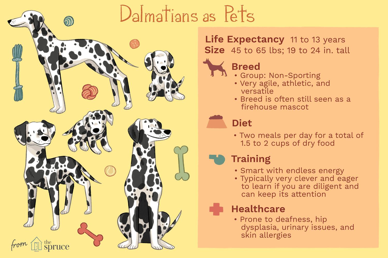 dalmatians as pets illustration