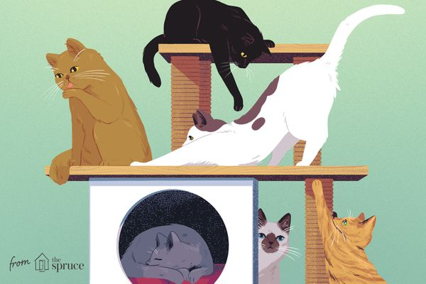 An illustration of a group of cats doing various activities on a cat tree