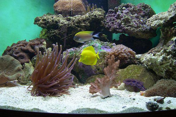 92 gallon reef tank