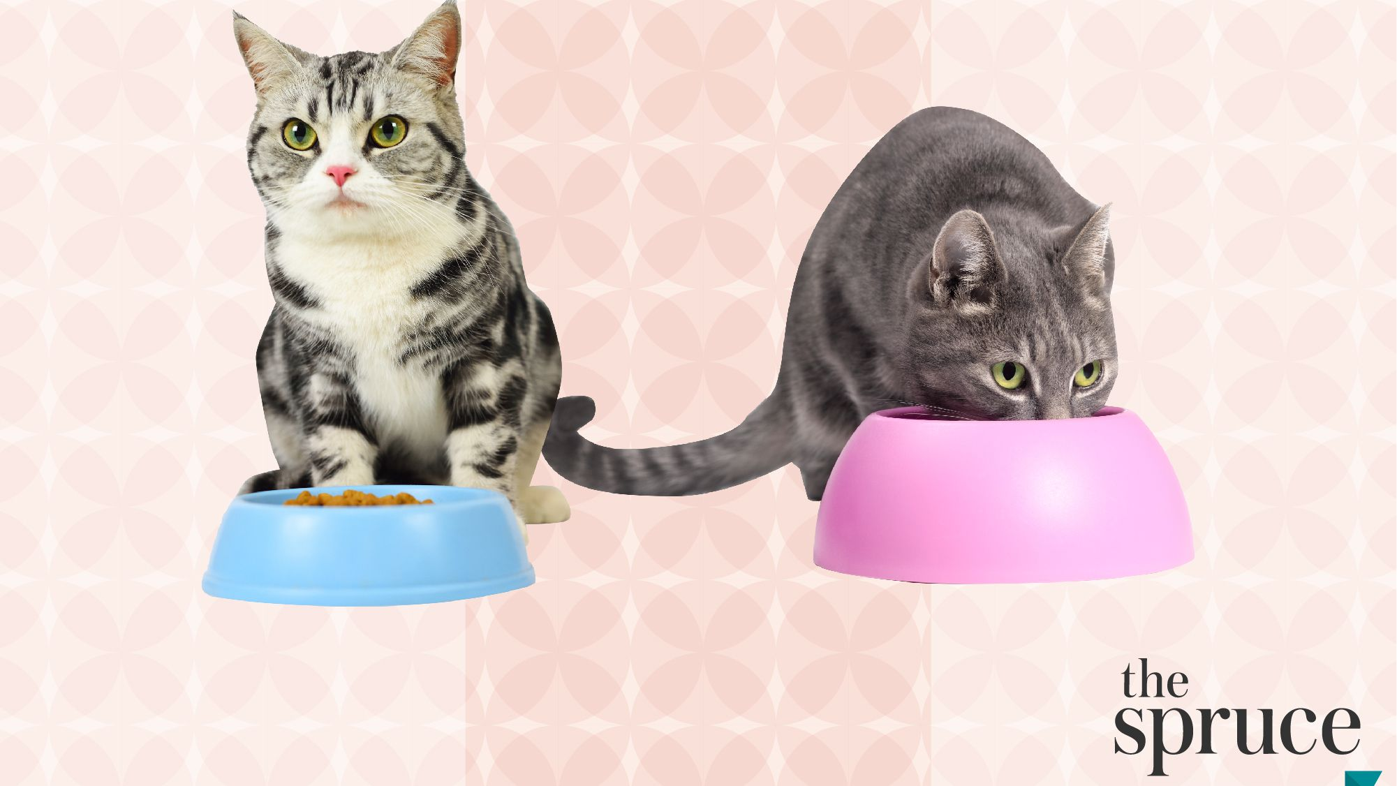 The 8 Best Cat Foods For Weight Loss In 2021