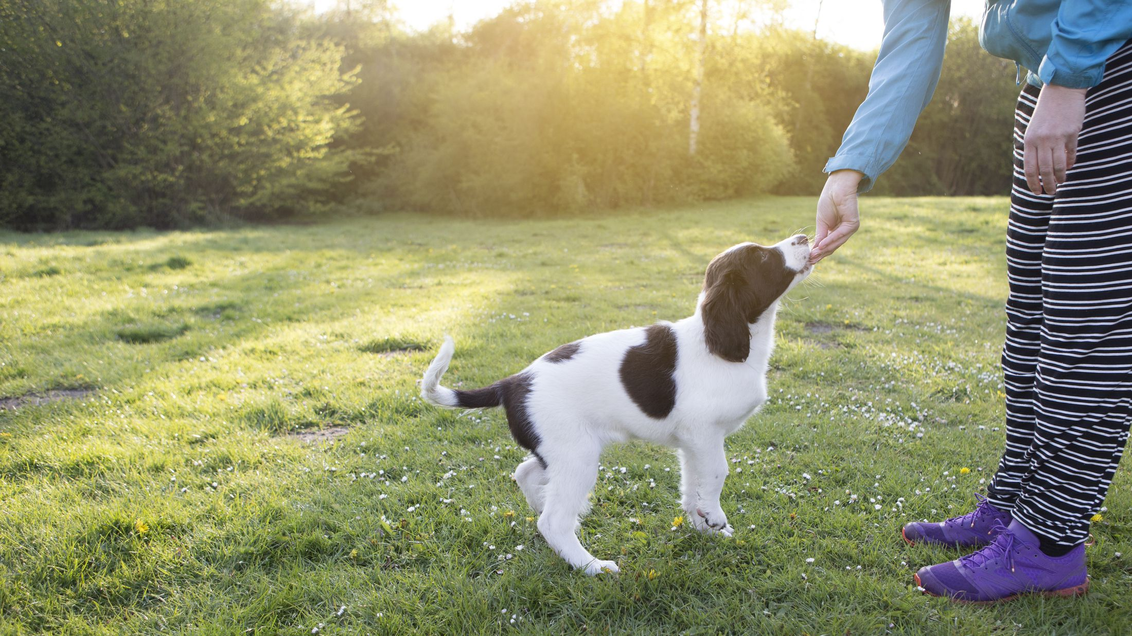 How to Train Your Dog Effectively in Sessions