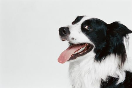 How To Care For Your Dog S Teeth
