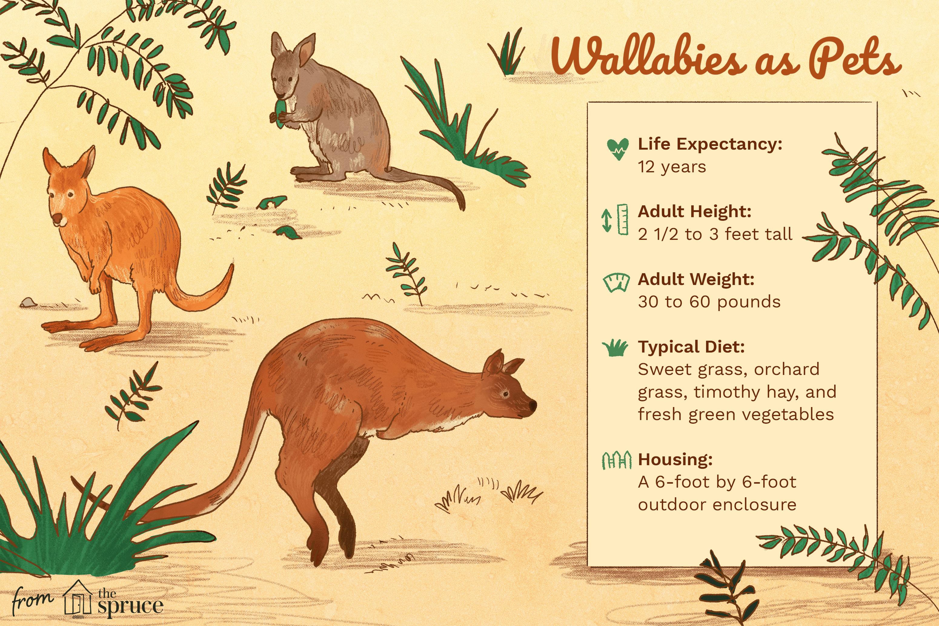 wallabies as pets