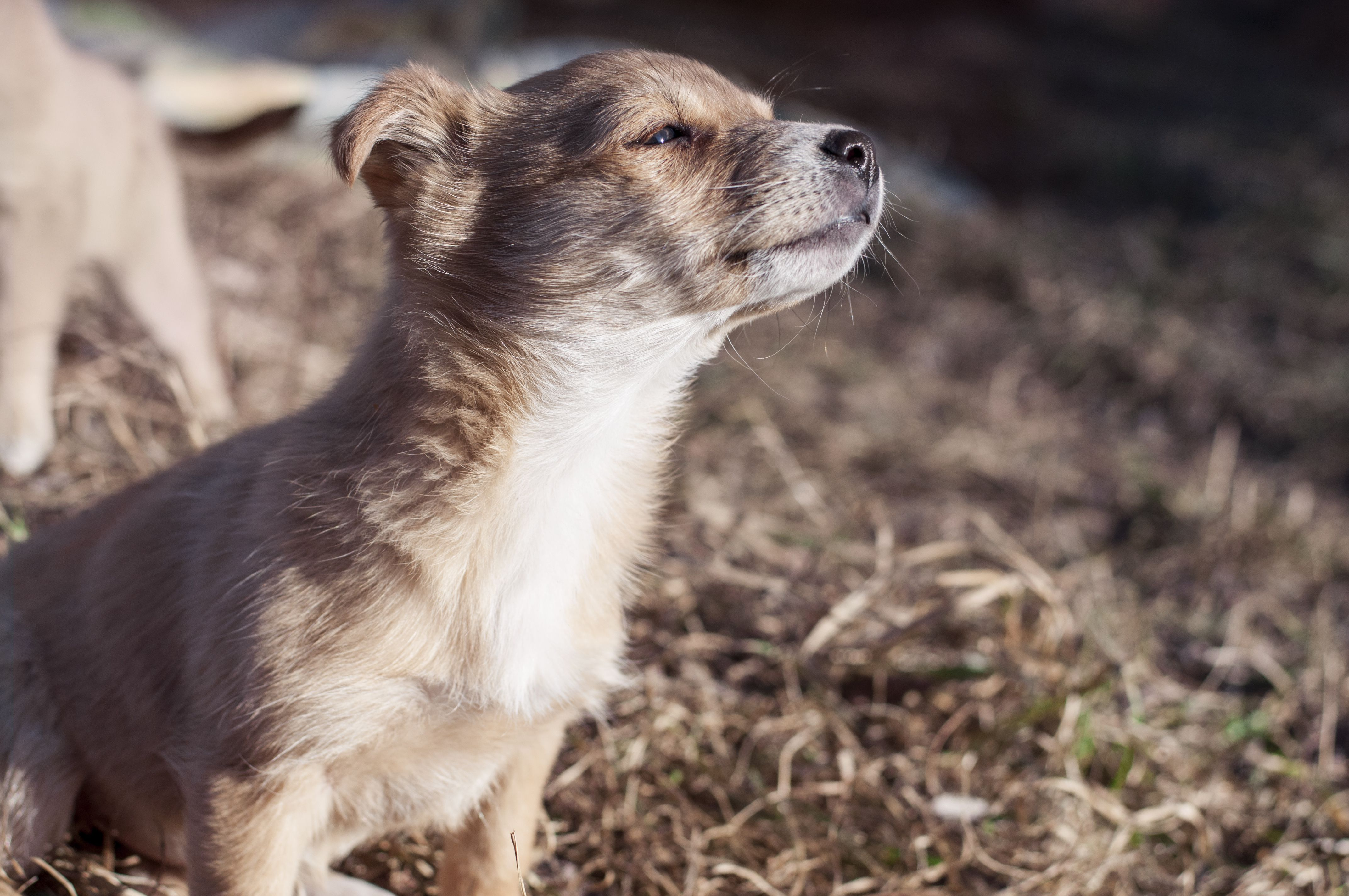 Small dog basking in sunlight