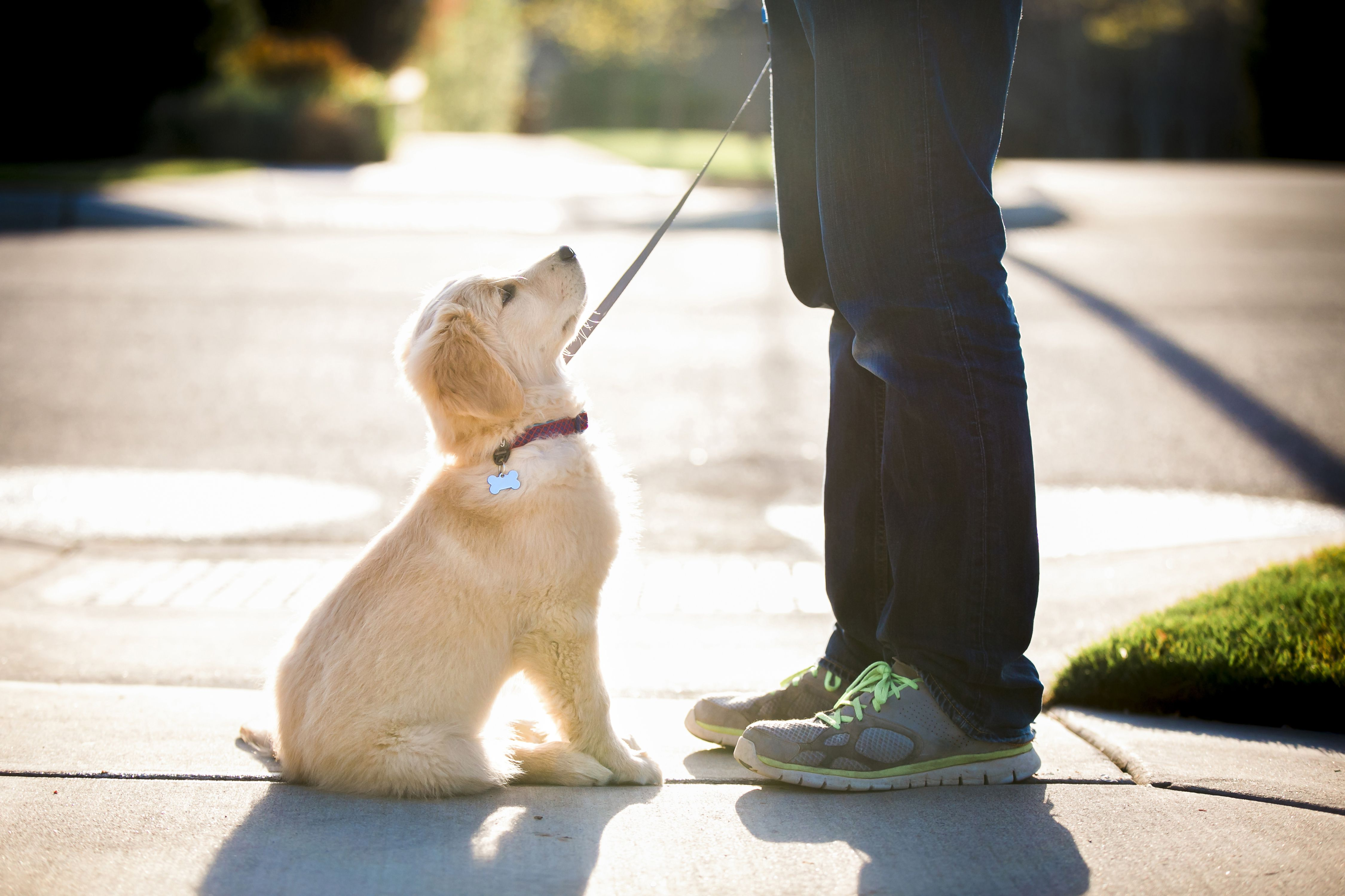 Low section of woman with puppy standing on footpath