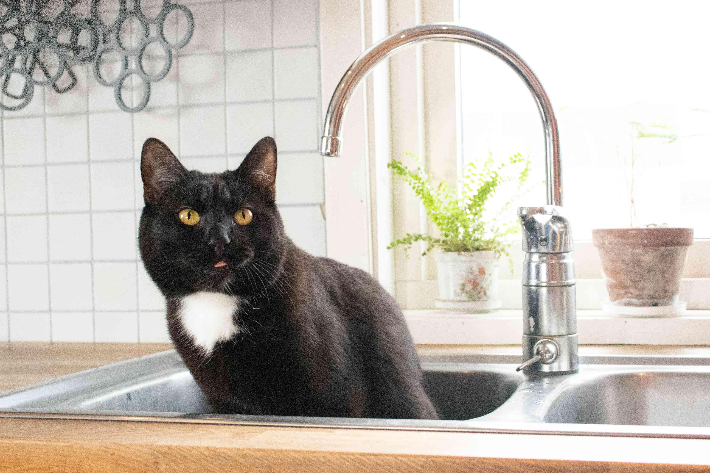 Black cat sitting in kitchen sink