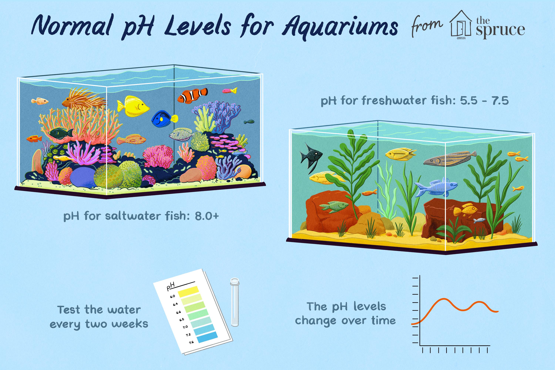 Aquarium Water Ph Maintenance