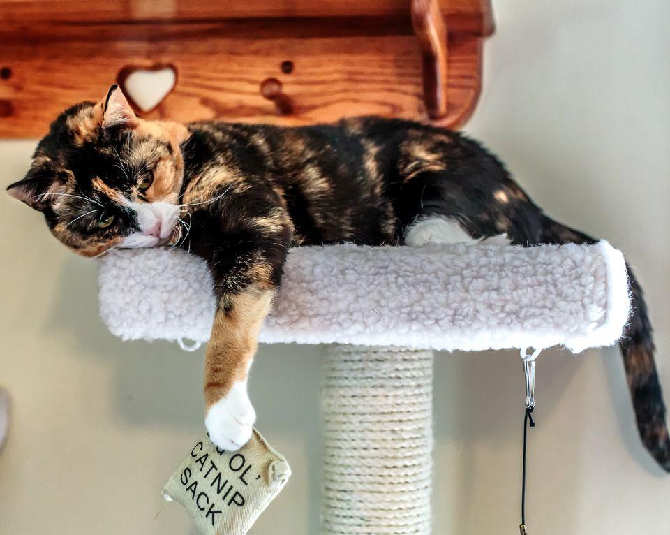 kittens game metaphysics