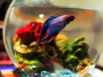 The Best Environment For A Betta Fish