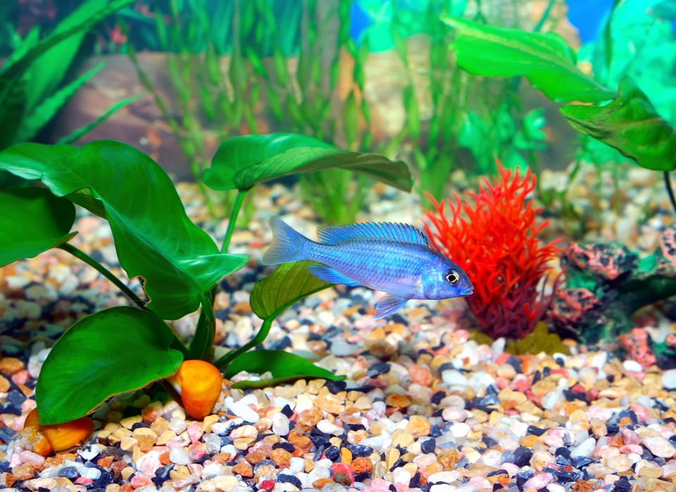 Aquarium with fish and live plants