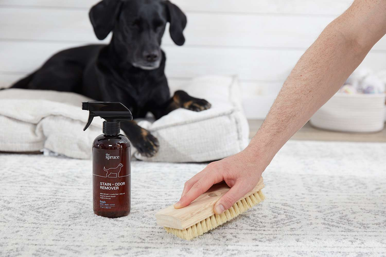 Limpiar una alfombra con quitamanchas y quita olores.