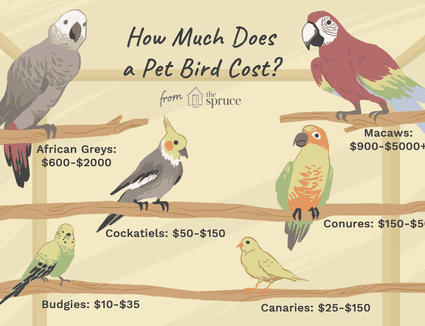 Illustrated guide to the prices of pet birds.