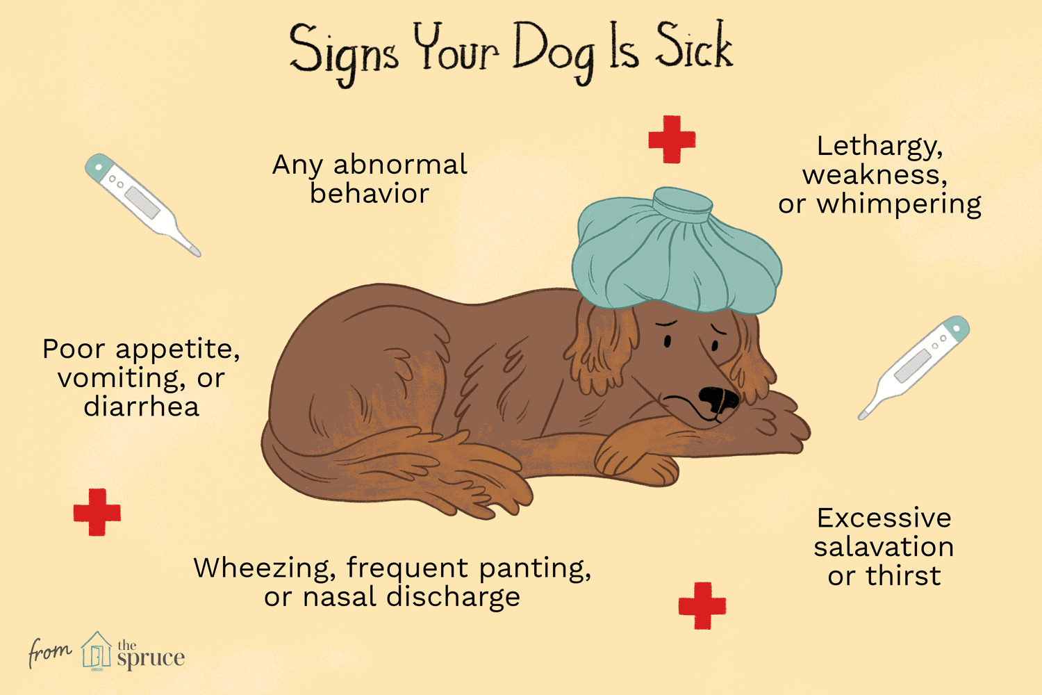 Signs of Illness in Dogs
