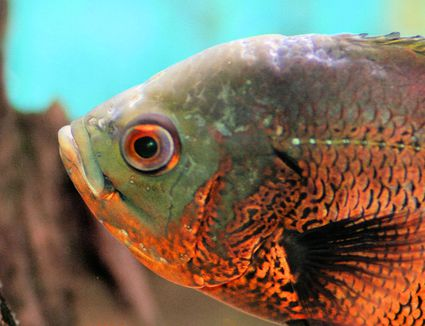 Fascinating Fish Names That Begin With O
