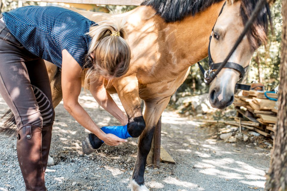 Young woman applying bandage to horse