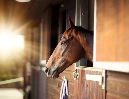 Stabled Thoroughbred