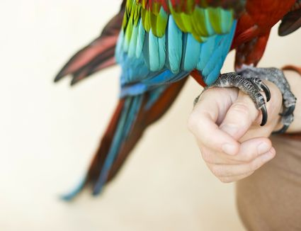 Colorful macaw parrot on neutral background