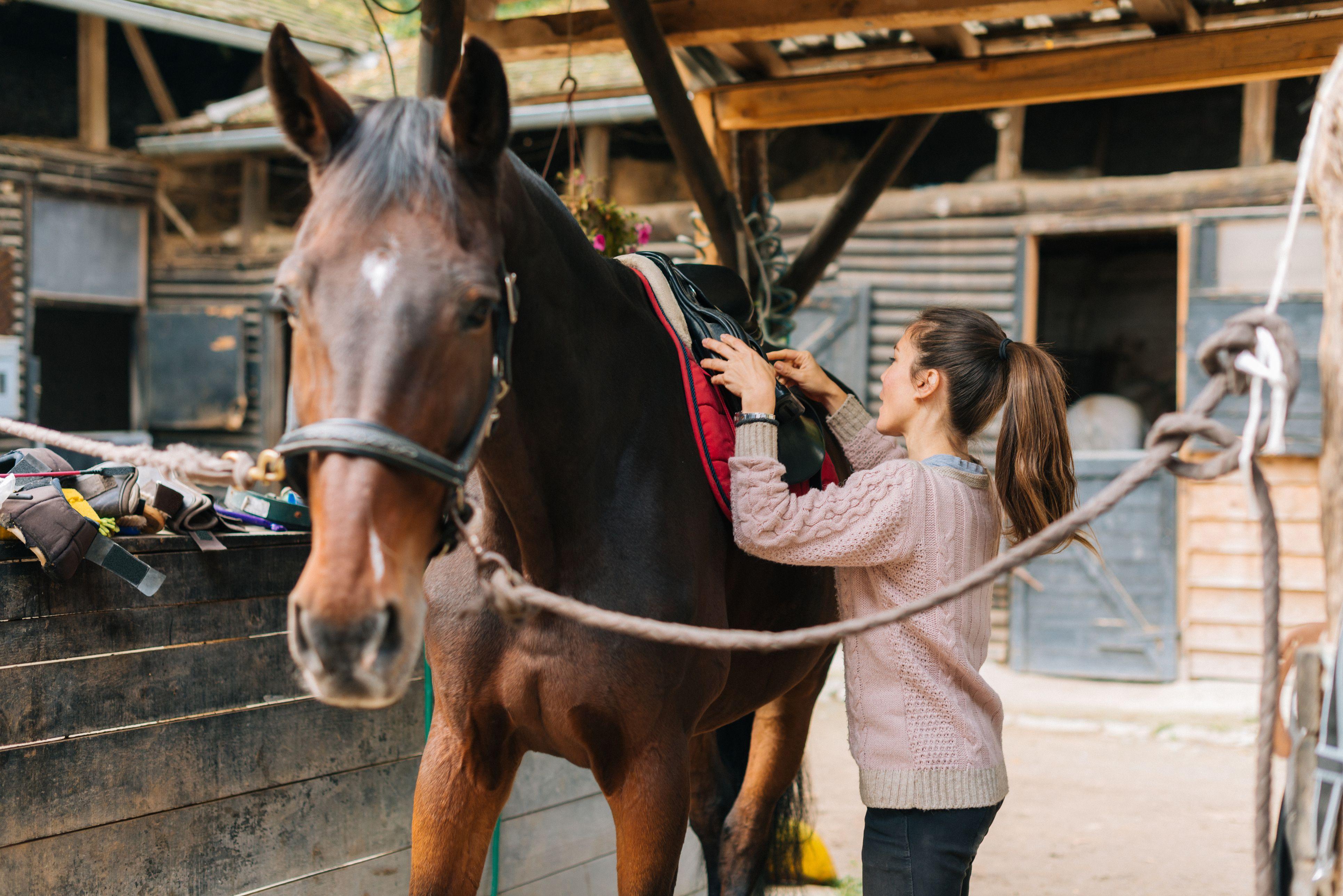 Rider putting saddle on her horse before dressage training