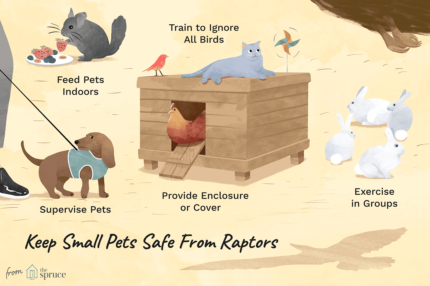 An illustration depicting how to keep small pets safe from raptors