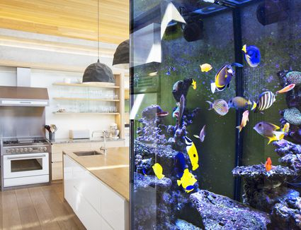 Tropical fish swimming in an aquarium outside kitchen