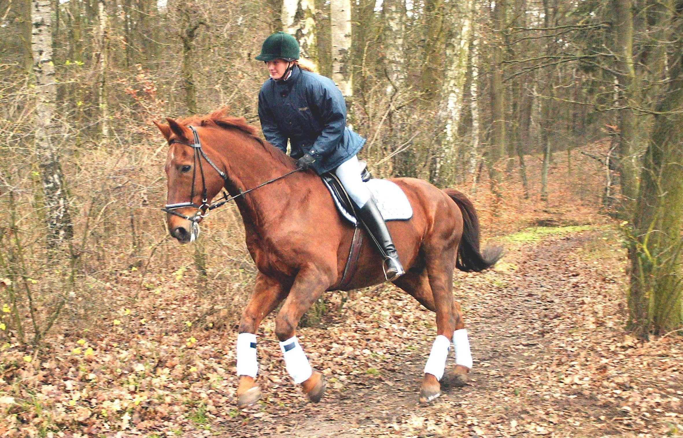 Rider galloping through forest on horse.