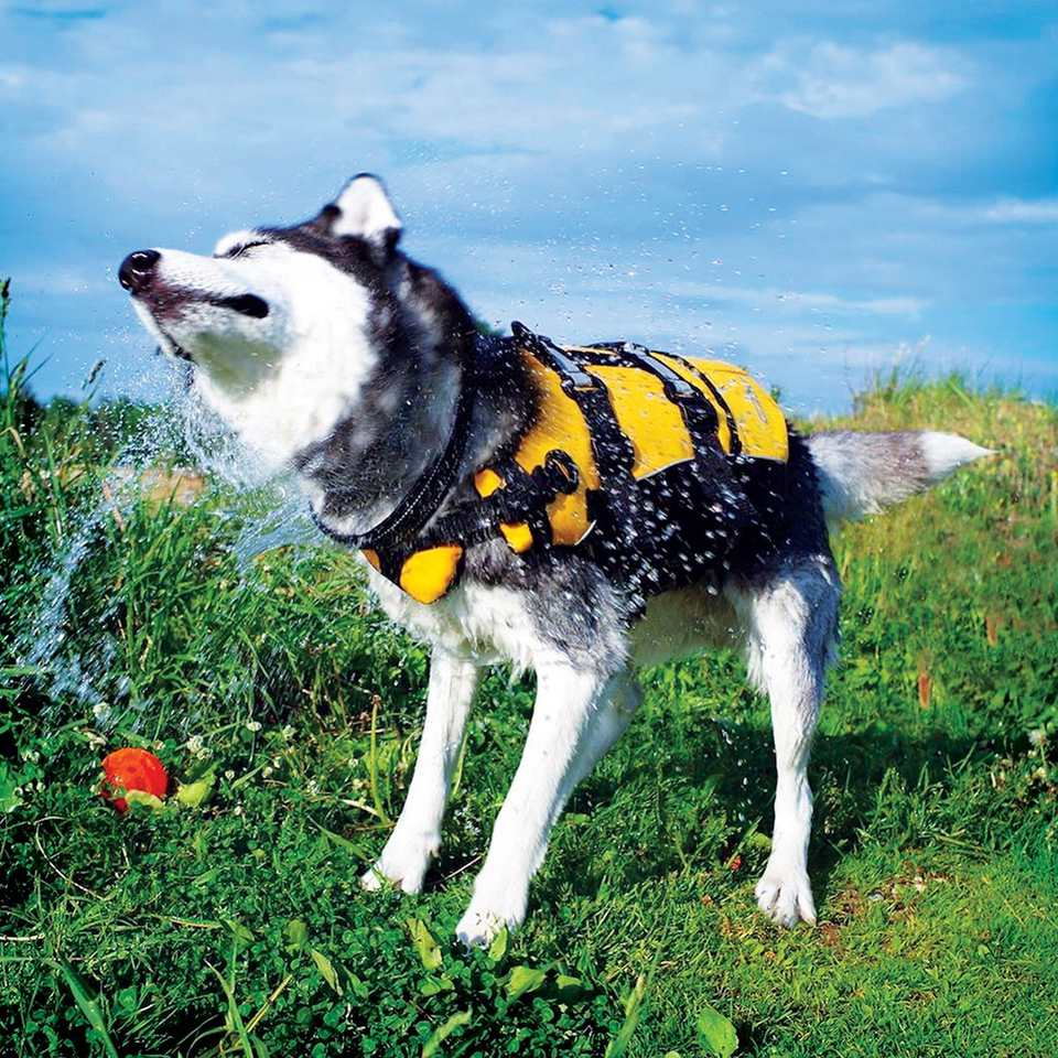ezy-dog-vest