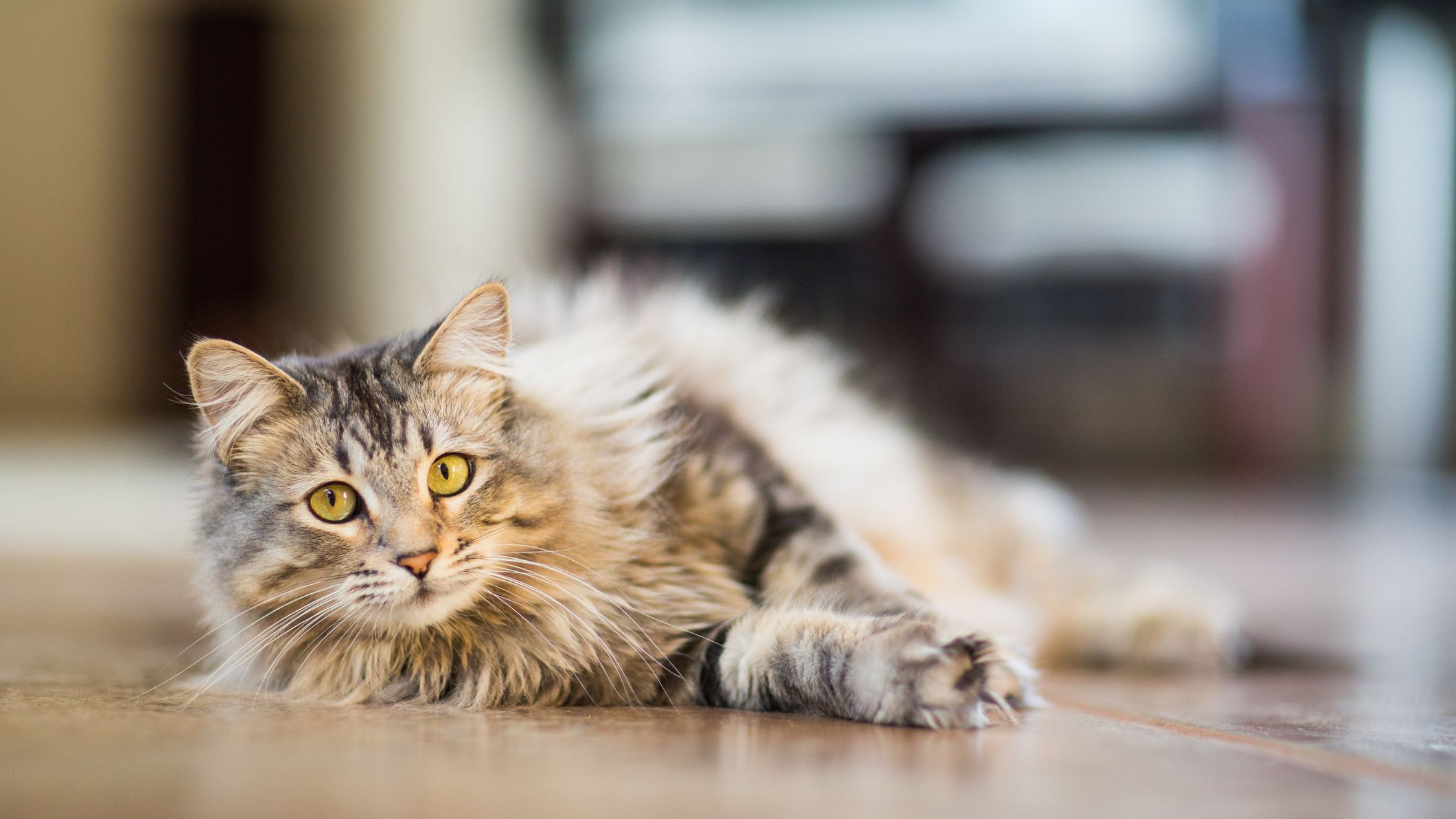 48 Cute Names For Male Cats