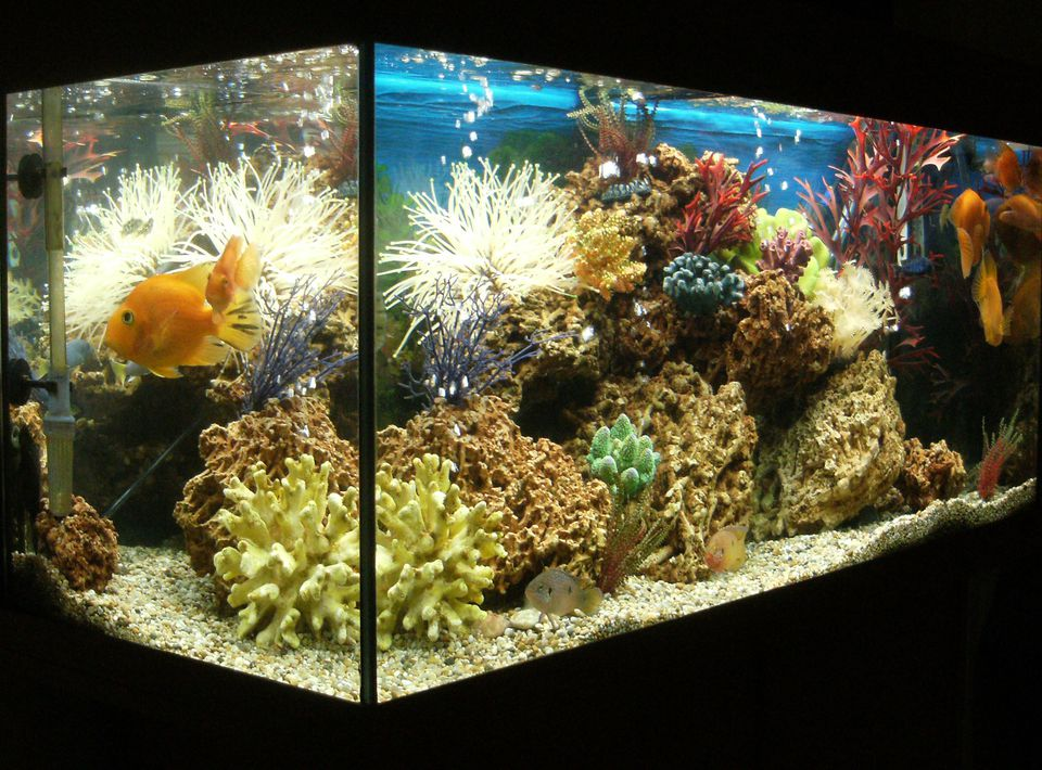 An aquarium heater that functions properly results in happy and healthy fish