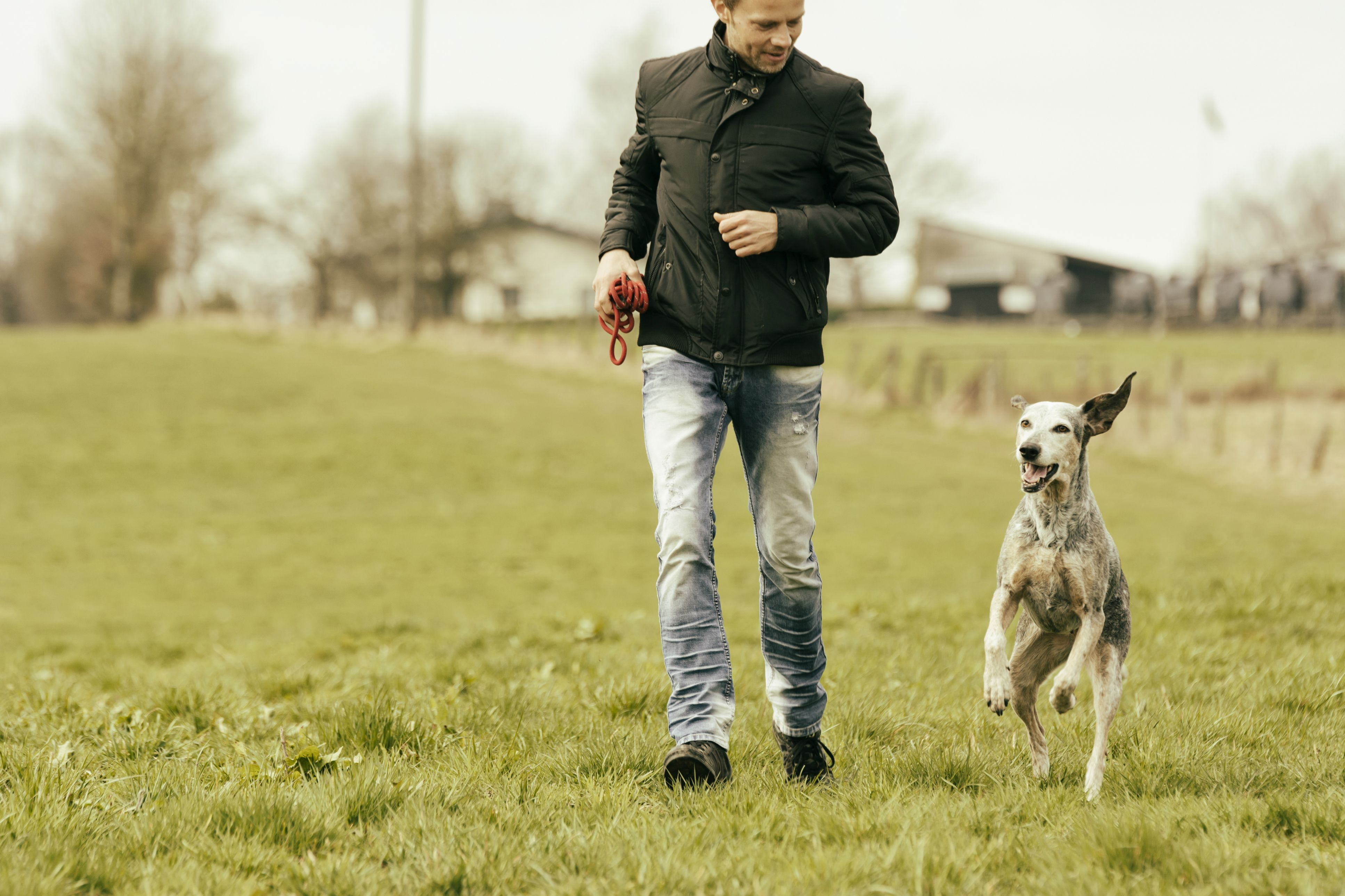The 7 Best Dog Training Books to Buy in 2019