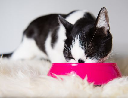 The Human Foods That Are Poisonous For Cats